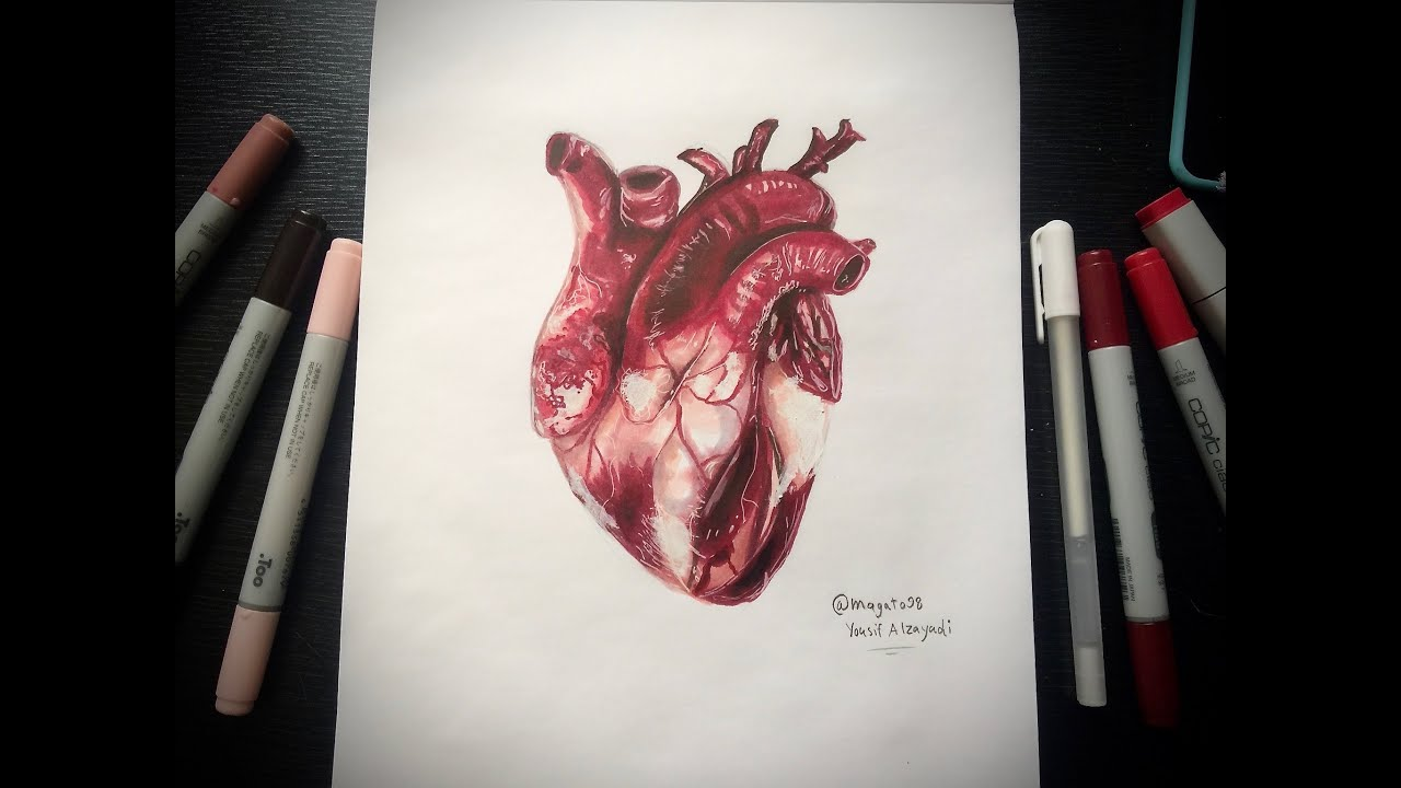 realistic human heart: speed drawing | magato - youtube, Muscles