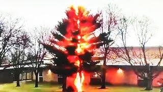Blitzeinschlag zerfetzt Baum innerhalb eines Wimpernschlags