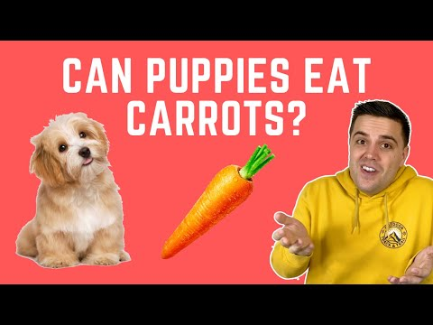 Can Puppies Eat Carrots? - YouTube