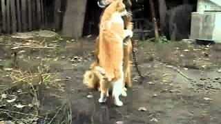 Кот и собака дружба на веки
