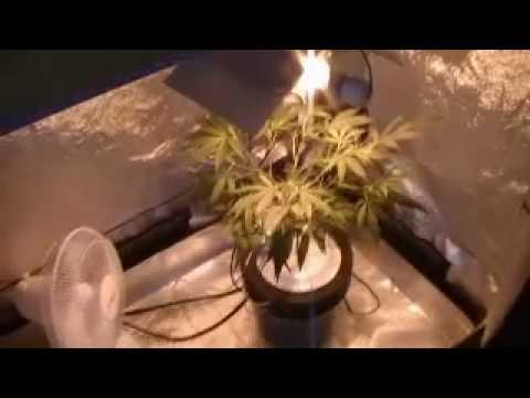 medical grow lab 80l tent 5-27-10 & medical grow lab 80l tent 5-27-10 - YouTube