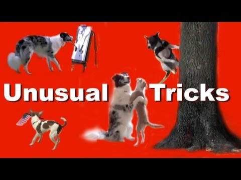 The Most Unusual and Amazing Dog Tricks