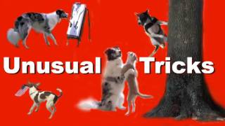 The most unusual and amazing dog tricks!