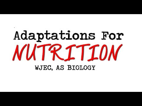 WJEC AS BIOLOGY REVISION BY2 - Adaptations For Nutrition