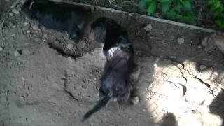 すごい勢いです。 http://www.nmt.ne.jp/~nowha/dog/