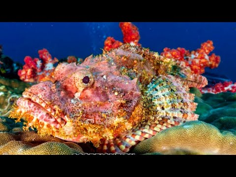 12 Most Unusual Fish In The Ocean Part 2