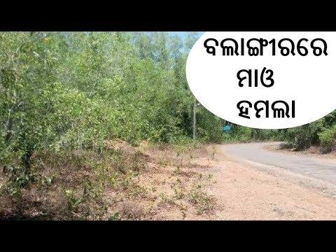 ବଲାଙ୍ଗୀର ତୁରେକେଲା ମହଖଣ୍ଡ ଜଙ୍ଗଲରେ ମାଓ ହମଲା | Mao Attack In Balangir | ETV News Odia