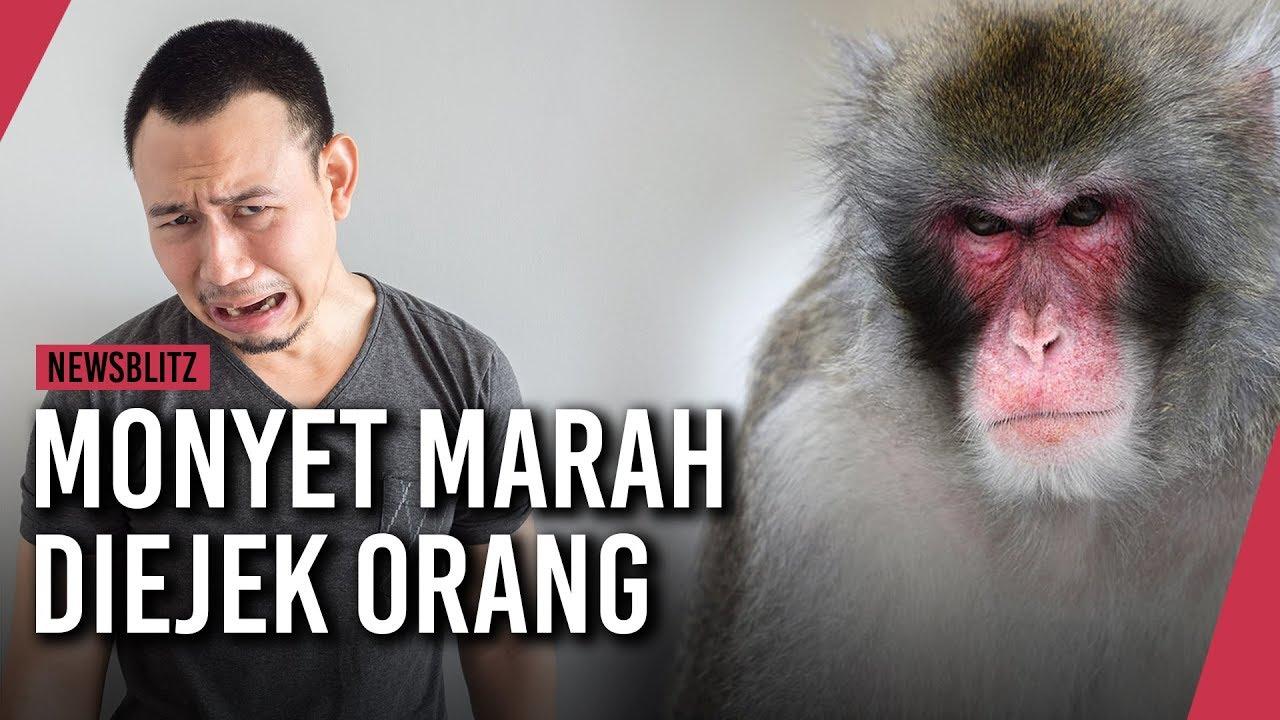 Monyet Marah Gara Gara Diejek Seorang Pria