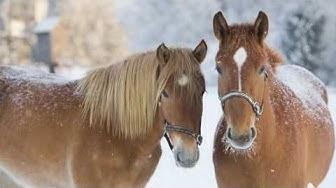 Hevosen maksimaalinen hapenottokyky