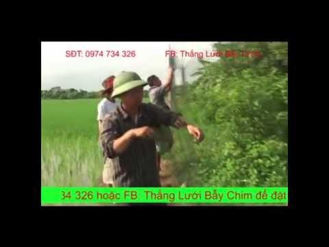 Bán lưới bẫy chim giá rẻ - LH 0974 734 326 - Lưới bẫy chim khuyên, ri, sẻ, chào mào, chòe