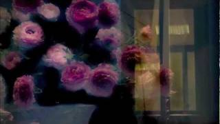 Con una rosa - Vinicio Capossela