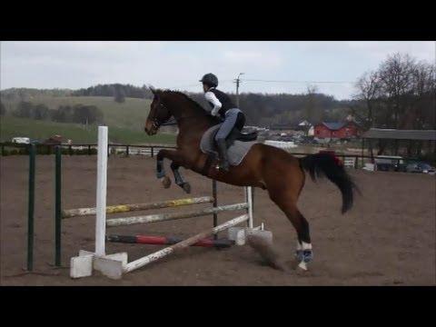 030448e6ba420 Brązowa odznaka jeździecka - skoki przez przeszkody - YouTube