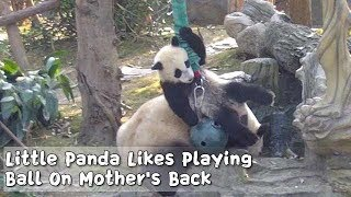 Little Panda Likes Playing Ball On Mother's Back | iPanda