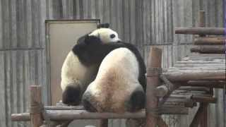 Kungfu panda fighting ( the real kungu fight )