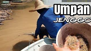 Cari Umpan Jenggo No1 Di Sungai   Objek Misteri   Mancing Udang Galah 2 Jam Jer (part 1)