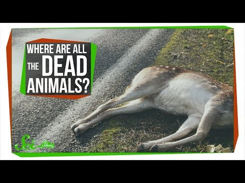 Where Are All The Dead Animals?