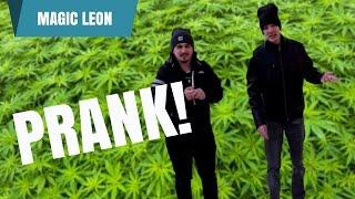 Prodajem marihuanu PUBLIC PRANK! 😂 I Magic Leon & TheDominikus
