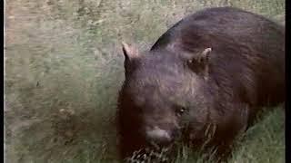 География: растительный и животный мир Австралии