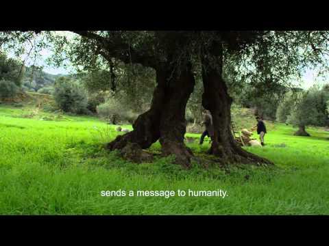 GAEA VIDEO GREEK EXTRA VIRGIN OLIVE OIL