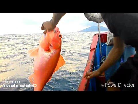 Mancing teknik dasaran dapat ikan RUBY SNAPPER