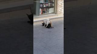 Animal Sex video