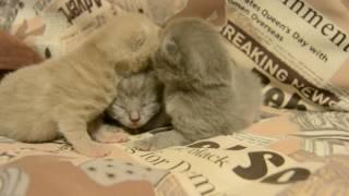 Дневник котят #2 | День 6 - Спасаем котят от холода!