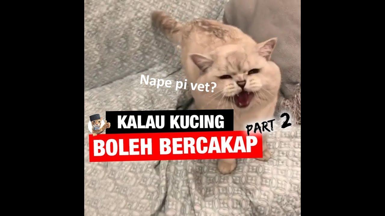Kucing kalau boleh bercakap (Part 2)