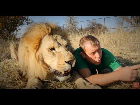 Как львы ИСПУГАЛИСЬ ТАПКА !