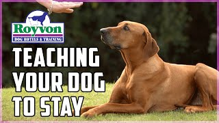 How To: Step By Step Obedience Training For Dogs To Stay
