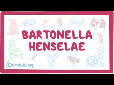 Bartonella henselae causes, symptoms, diagnosis, treatment, pathology