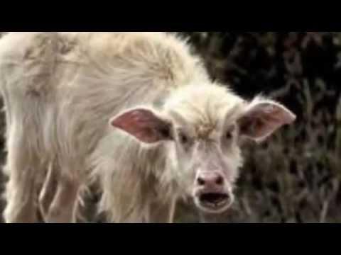 Lustige Tiere - YouTube