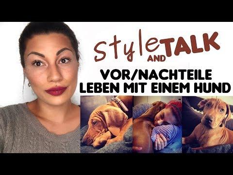 Style And Talk - Vor Und Nachteile - Leben Mit Einem Hund