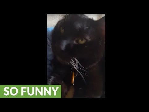 Sleeping cat immediately wakes up to magic word