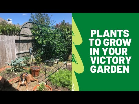 five-plants-to-grow-in-a-victory-garden