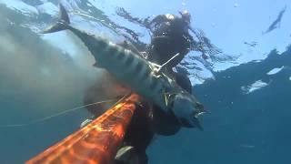 Torik-Bonito spearfishing by Cihan Atahan
