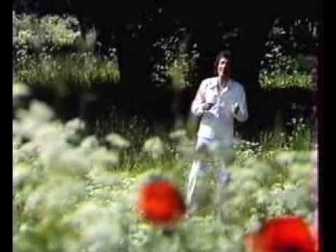 «Песня о моей любви»,  стихи Сергея Острового, музыка Евгения Мартынова,  поёт Яак Йоала