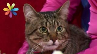 Как сделать из кошки-демона ласкового домашнего любимца– Все буде добре. Выпуск 969 от 20.02.17(, 2017-02-20T14:00:03.000Z)