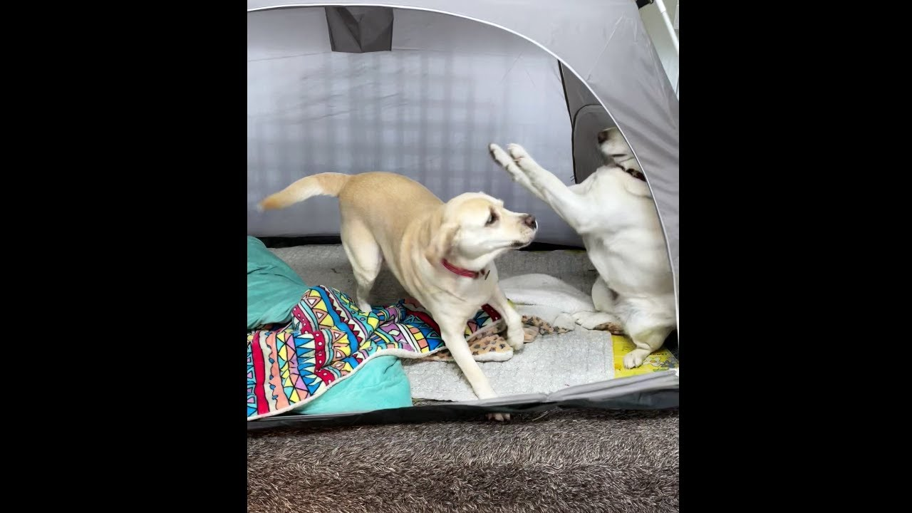 똑똑한 강아지 VS 천재 강아지
