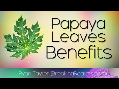 Papaya Leaves: Benefits and Uses