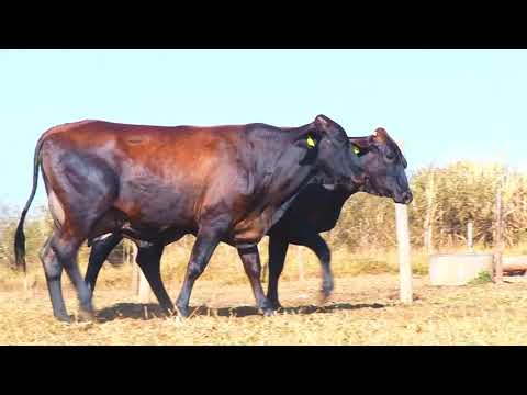 LOTE 10   7509 BE, LINO0482