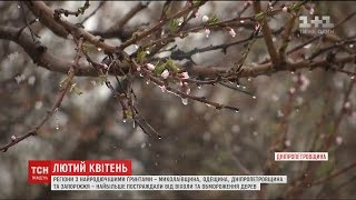 Зустріч двох циклонів на території України призвела до втрати 30% врожаю