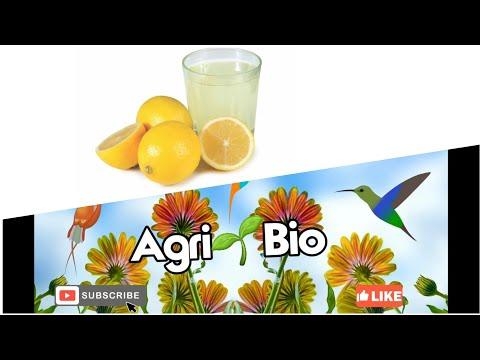 acqua-e-limone,-benefici-per-la-salute