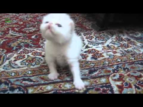 Kittens Learning to Meow Compilation 2014 [NEW HD]