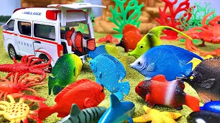 Toy fish rides an ambulance Fish like real with fishing Water | Toys Fish Toy Videos For Kids