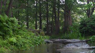 차분한 빗소리와 울창한 숲속의 시냇물 징검다리, 양평 양수리 세미원 정원에서... ASMR