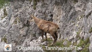 Wandelreis in het Tannheimer Tal