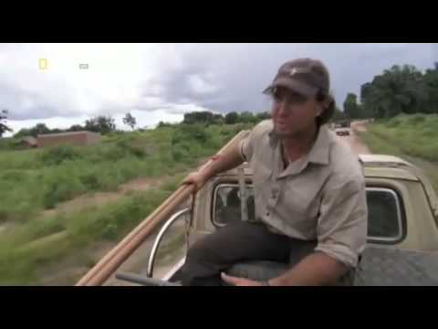 Man Eater of the Congo   english Documentary National Geographic Wild  Part 1
