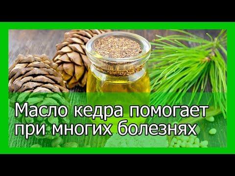 Масло из сибирского кедра помогает при многих болезнях