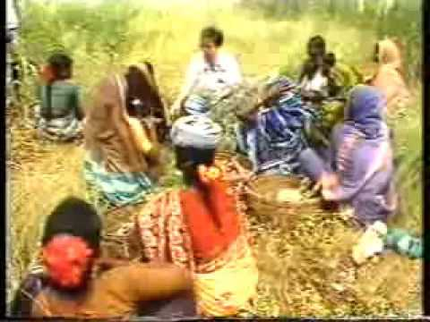 Participatory Research With Women Farmers (ICRISAT) – India