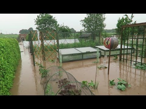 Flash Flood.. Vegetable Garden Under Water.